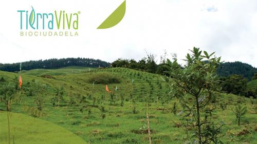 Mantenimiento de árboles en TierraViva