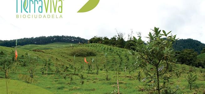 Invitación: Jornada de mantenimiento de árboles en TierraViva
