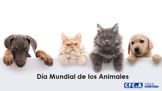 Compártenos una foto con tu mascota o animal favorito